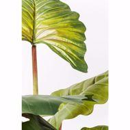 Picture of Rainforest 160 Deco Plant